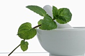 A sprig of mint with mortar and pestle
