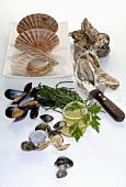 Verschiedene frische Muscheln