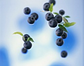 Several blueberries with leaves