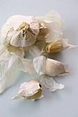 Garlic bulb and individual garlic cloves
