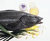 Black sea bass, various ingredients on sheet of glass