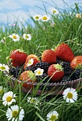 Bowl of strawberries and blackberries in grass with daisies