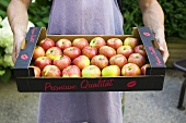 Man holding box of fresh apples in open air