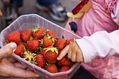 Child's hand reaching for strawberries in a plastic punnet