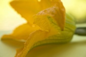Courgette flower on table