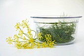 Dill in glass bowl, dill flowers beside it