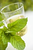 A sprig of fresh mint in front of tea glass