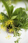 Bunch of herbs with dill flowers