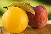 Yellow plum with leaves and red plum