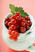 Redcurrants with leaves in a jug