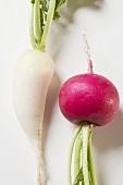 Red radish and icicle radish (detail)