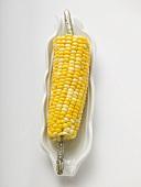 Corn cob in white dish