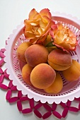 Apricots and roses in plastic dish
