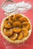 Apricot tart, icing sugar in sieve beside it