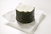 Goat's cheese in chestnut leaf on paper