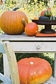 Squashes and pumpkins on chair and garden table (outdoors)