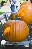 Orange pumpkins in wooden cart (out of doors)