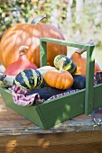 Various types of pumpkins & squashes, some in wooden basket