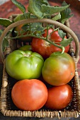 Beefsteak tomatoes (ripe and unripe) with leaves in basket