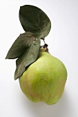 Fresh quince with leaves