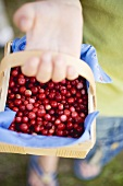 Hand holding woodchip basket of cranberries