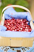 Cranberries in a woodchip basket