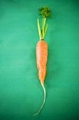 Fresh carrot on green background