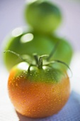 Tomatoes, green and orange, with drops of water