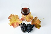 Black grapes, variety Spätburgunder, leaves, glass of red wine