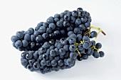 Black grapes, variety Solara