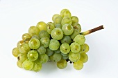Green grapes, variety Ehrenfelser