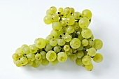 Green grapes, variety Faberrebe