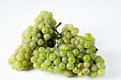 Green grapes, variety Riesling