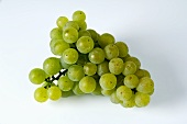 Green grapes, variety Silvaner