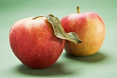 Two Elstar apples, one with leaf