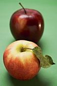 Two different apples (varieties Elstar and Stark)