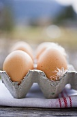 Brown eggs with feathers in egg box on tea towel