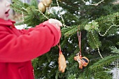 Child hanging gingerbread figures on Christmas tree out of doors