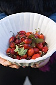 Hands holding a dish of rose hips
