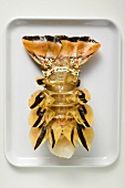 Slipper lobster, underside