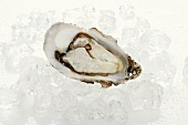 Fresh oyster, opened, on ice cubes