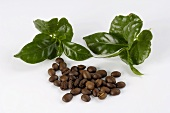 Coffee beans and coffee tree leaves