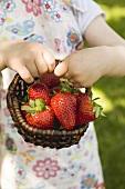 Child's hands holding basket of fresh strawberries