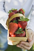 Person holding woodchip basket of fresh strawberries