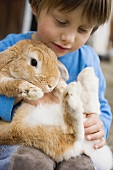 Small boy holding live rabbit