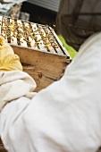 Beekeeper holding beehive