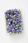 Borage flowers in plastic tray