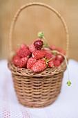 Wild strawberries in basket