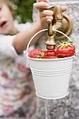 Washing strawberries in a bucket
