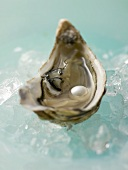 Fresh oyster with pearl on crushed ice